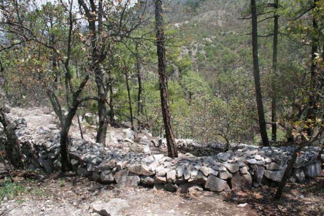 trabajos de reforestacion huápoca (2)